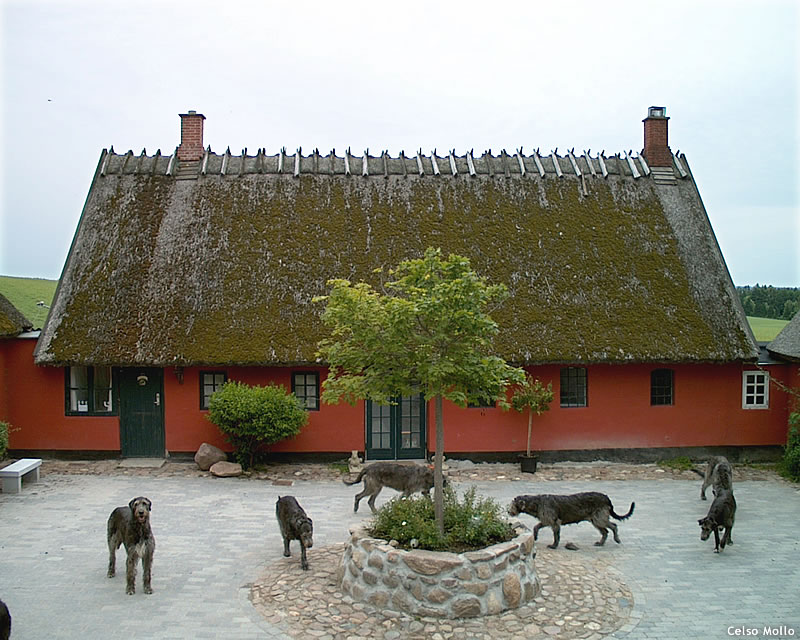 Wolfhouse Courtyard