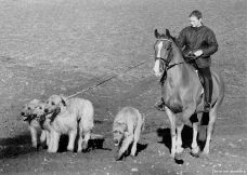 Pernille on Horseback with Hounds, 1980s