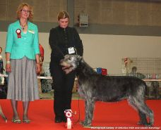 Wolfhouse Pavane, World Show