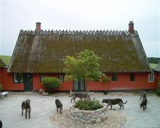 Courtyard at Wolfhouse